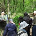 【5/8】「春の山野草観察会」