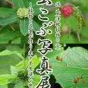 【6/5~7/4】「虫こぶ写真展」植物と昆虫が作り出す不思議な世界