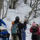 中止のお知らせ【3/14】樹木の冬芽観察会